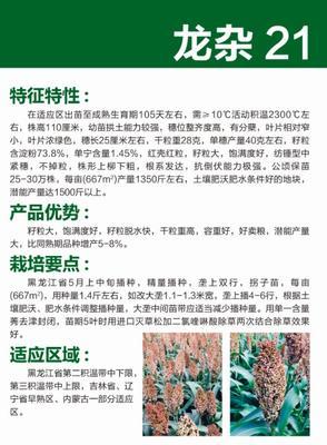 黑龙江省哈尔滨市道里区龙杂21 杂交种 ≥80%