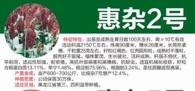 黑龙江省哈尔滨市道里区惠杂2号高粱种子 杂交种 ≥80%