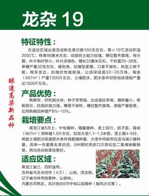 黑龙江省哈尔滨市道里区龙杂19 杂交种 ≥80%