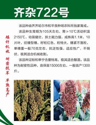 这是一张关于齐杂722号高粱种子 杂交种 ≥80% 的产品图片