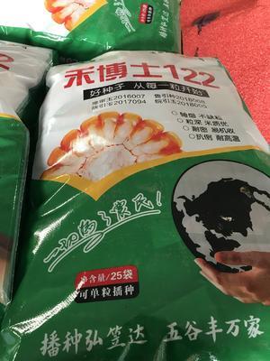 河南省郑州市中牟县开元棋牌平台玉米种子 双交种 ≥97%