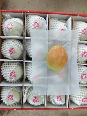 这是一张关于库尔勒香梨 70mm以上 100-150g 的产品图片