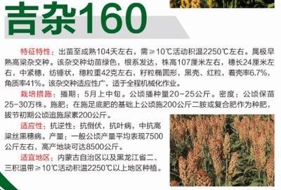 黑龙江省哈尔滨市道里区吉杂160高粱种子 杂交种 ≥80%