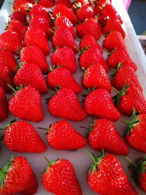 辽宁省丹东市振安区九九草莓 20克以上