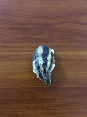广东省佛山市南海区乳山牡蛎