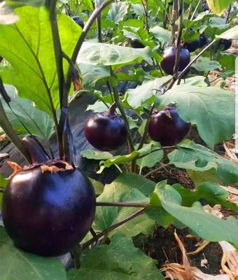 这是一张关于紫光圆茄 混装通货 圆茄 让您舒心的圆茄代办的产品图片