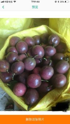 广西壮族自治区玉林市容县紫色百香果 70 - 80克