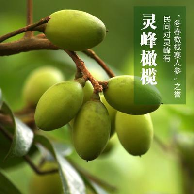 广东省揭阳市普宁市青榄 12g以上