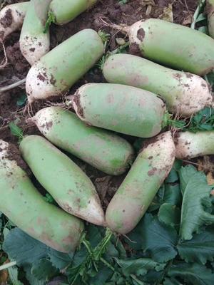 陕西省西安市阎良区791罐萝卜 1.5~2斤
