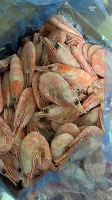 河北省秦皇岛市海港区加拿大甜虾 9钱以上 野生