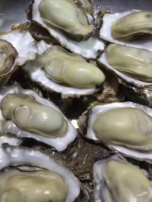 山东省烟台市芝罘区乳山牡蛎 2-3两/只 人工殖养