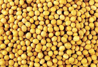 吉林省吉林市蛟河市有机大豆油 自己家种的无公大豆