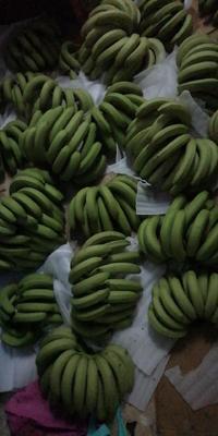 广西壮族自治区南宁市武鸣县广西蕉 七成熟 净含量九斤多