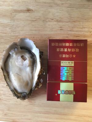 广东省佛山市南海区湛江牡蛎 3-4两/只 野生