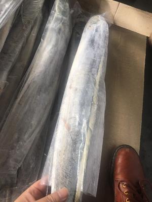 这是一张关于印度带鱼 1.5-2.5公斤 野生 的产品图片
