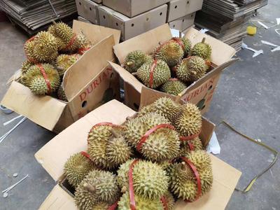 广西壮族自治区崇左市凭祥市泰国金枕榴莲 90%以上 4 - 5公斤
