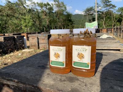 湖南省娄底市双峰县土蜂蜜 桶装 2年以上 100%