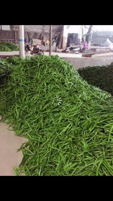 这是一张关于线椒 中辣 靑色 混装通货 的产品图片