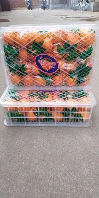 这是一张关于塔罗科血橙 80-85mm 4-8两 的产品图片