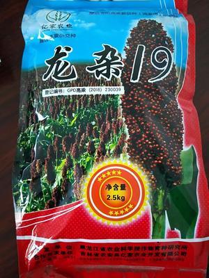 黑龙江省哈尔滨市道里区龙杂19号高粱种子 杂交种 ≥80%