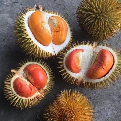 广东省广州市增城区马来西亚红肉榴莲 60 - 70%以上 0.6公斤