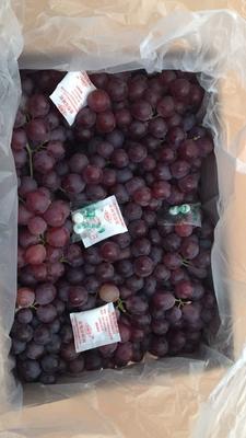 这是一张关于亚洲香玫瑰葡萄 1.5- 2斤 5%以下 1次果 玫瑰香葡萄和红地球的产品图片