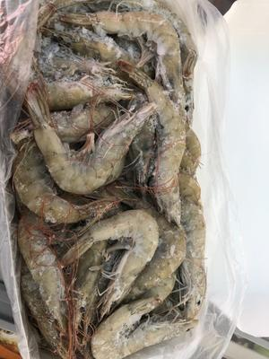 河北省石家庄市桥西区冻海虾