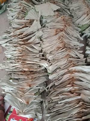 江西省赣州市石城县荷叶