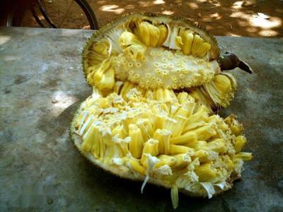 云南省昆明市官渡区泰国菠萝蜜 10-15斤
