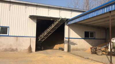 辽宁省营口市大石桥市玉米干粮 净货 水份14%-16%