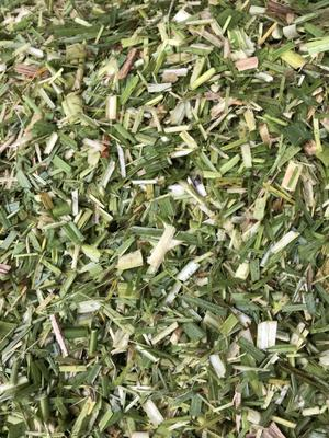 广西壮族自治区来宾市兴宾区青贮饲料 大量出售青贮甘蔗尾