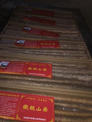 河南省焦作市孟州市铁棍山药 60cm