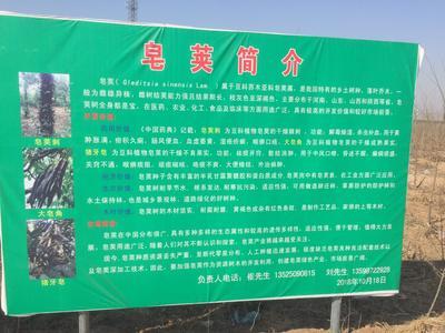 河南省新乡市红旗区皂角树