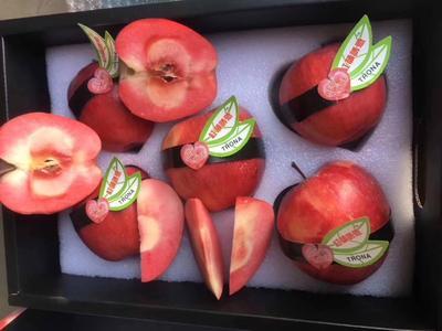 广东省广州市增城区红色之爱苹果 70mm以上 片红 纸+膜袋
