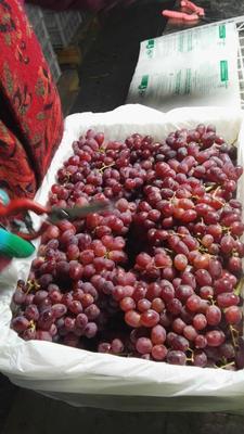新疆维吾尔自治区巴音郭楞蒙古自治州和静县克伦生无核葡萄 1-1.5斤 5%以下 1次果