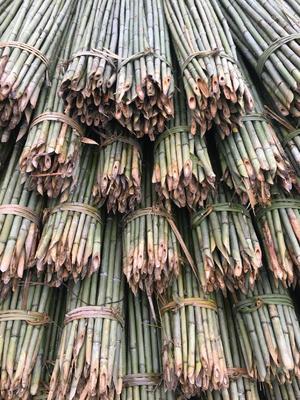 四川省巴中市巴州区小黄瓜 混装通货 供应竹竿