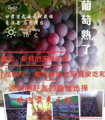 甘肃省武威市天祝藏族自治县红提 1次果 5%以下 1.5- 2斤