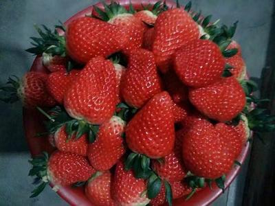 这是一张关于甜宝草莓 40克以上 的产品图片