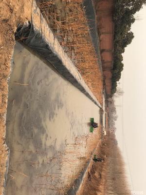 河南省郑州市荥阳市白莲藕 35~40cm 9-11cm