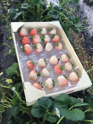 这是一张关于甜宝草莓 50克以上 的产品图片