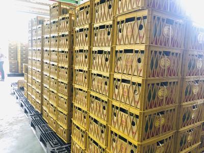 北京丰台区干荛榴莲 2 - 3公斤 30 - 40%以上