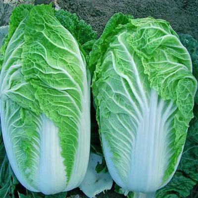 这是一张关于傲雪迎春白菜 净菜 3~6斤 的产品图片