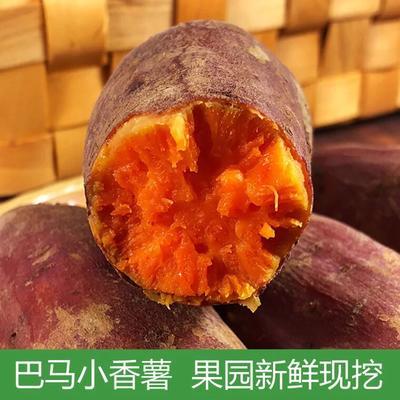 广西壮族自治区南宁市上林县番薯 混装通货 红皮