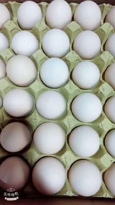 湖南省长沙市长沙县粉蛋 食用 箱装