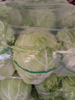 山东省潍坊市坊子区黄心大白菜 6~10斤 净菜