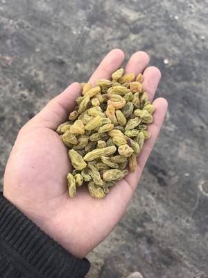 新疆维吾尔自治区吐鲁番地区吐鲁番市新疆绿葡萄干 优等