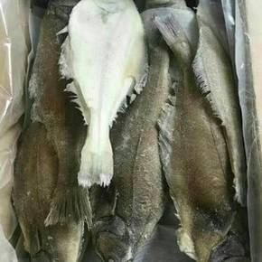 辽宁省丹东市东港市冰冻鸦片鱼