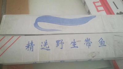 山东省潍坊市寒亭区舟山带鱼 0.5公斤以下 野生