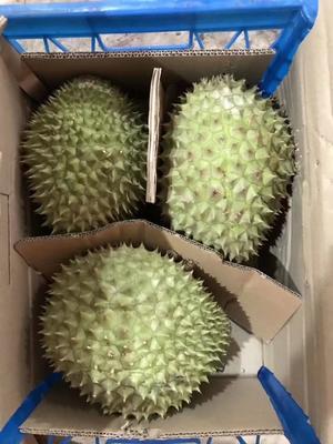 广西壮族自治区崇左市凭祥市干荛榴莲 1.5公斤 90%以上