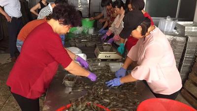 福建省漳州市漳浦县中国对虾 2钱以下 人工殖养